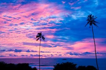 夕日のビーチのヤシの木