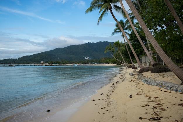 Пальмы на пляже, кох самуи, провинция сурат тани, таиланд