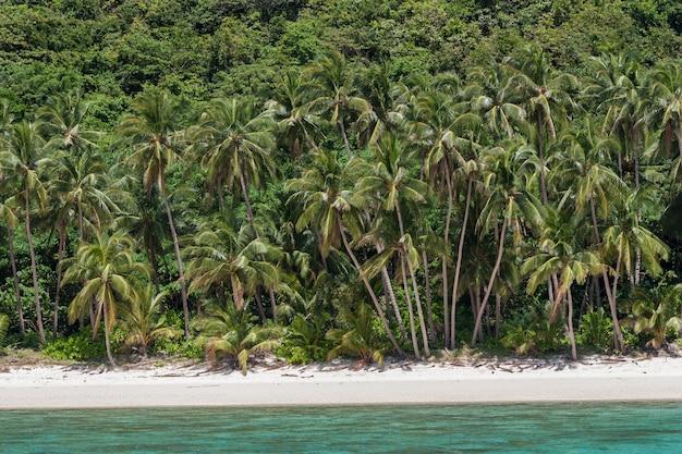 空の白い砂のビーチのパラダイスブルーラグーンのヤシの木