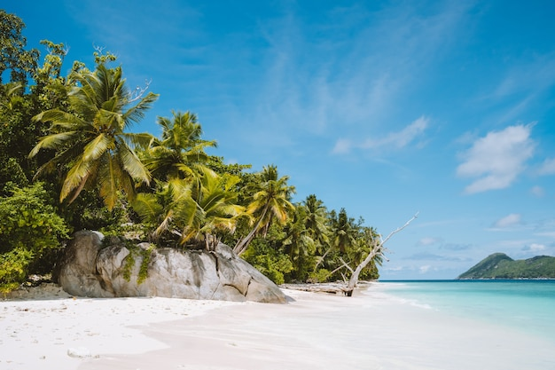 エキゾチックな人里離れたビーチのヤシの木。白い雲と青い空。休暇休暇ライフスタイル旅行のコンセプト。