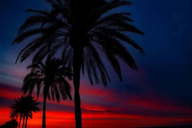 マヨルカ島のビーチでヤシの木。熱帯のビーチコンセプトに旅行や休暇の写真。
