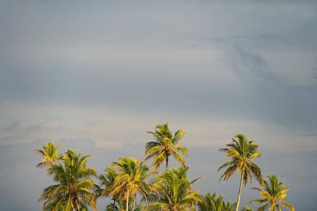 Пальмы на фоне неба копируют космический отдых и концепцию путешествий