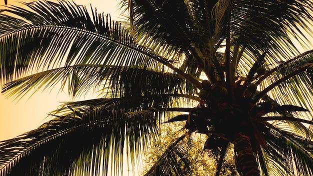 美しい夕日を背景にしたヤシの木。熱帯のヤシの葉、花柄の背景、実際の写真