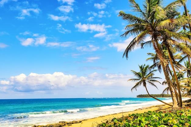 ドミニカ共和国の野生の熱帯のビーチのヤシの木。休暇旅行の背景。