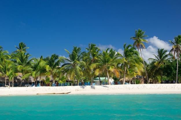 Пальмы на тропическом пляже