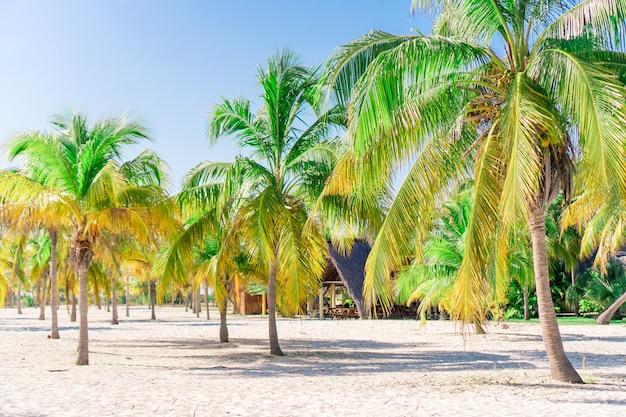 하얀 모래 해변에 야자수. 플라 야시 레나. 카요 라르고 쿠바.