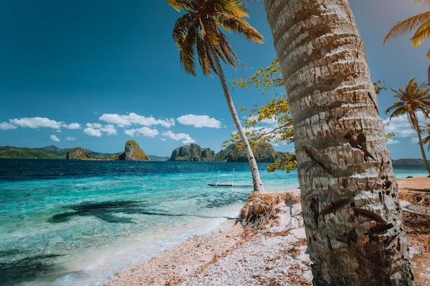 Palm trees on remote beach on an secluded island on palawan, philippines.