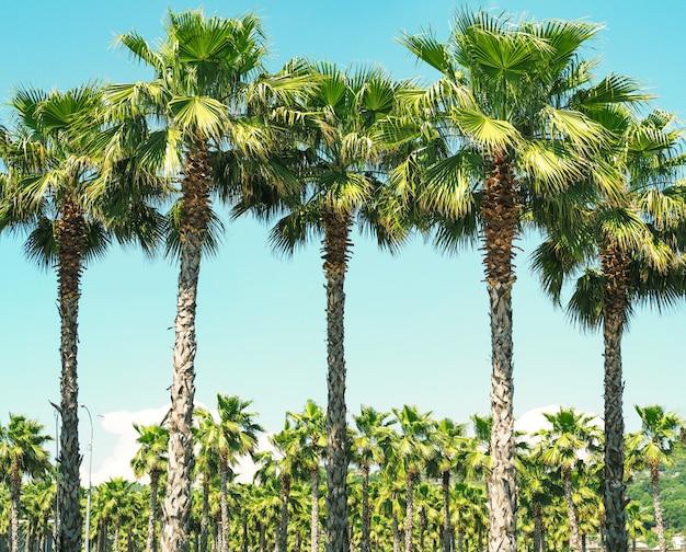晴れた夏の日の青い空の背景にヤシの木が漕ぐ