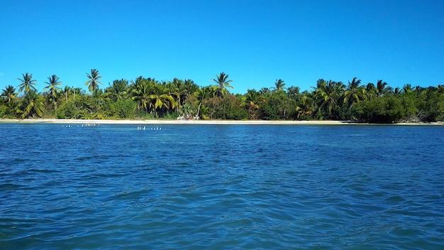 Palm trees on a sandy beach. dominican republic