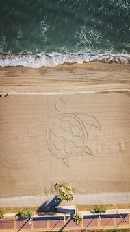 Palm trees and sandy beach with a turtle in the sand in malaga, andalusia region of spain.