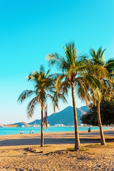 Palm trees on the shore of the indian ocean. emirate of fujairah, uae. bright toned photo.