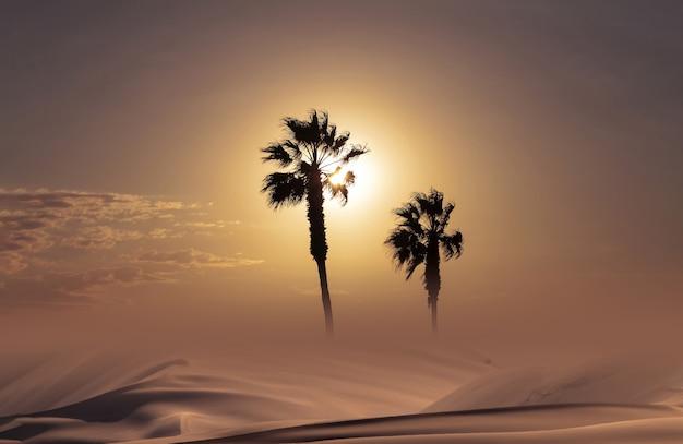 Силуэт пальм на африканском закате