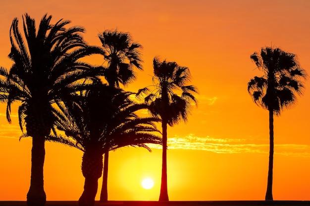 Силуэт пальм на красивом ярком закате