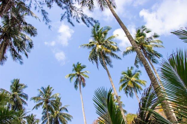 Palm trees and the sky bright on beautiful area at koh kood island trat province thailand.