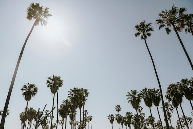 Palm trees in the summer