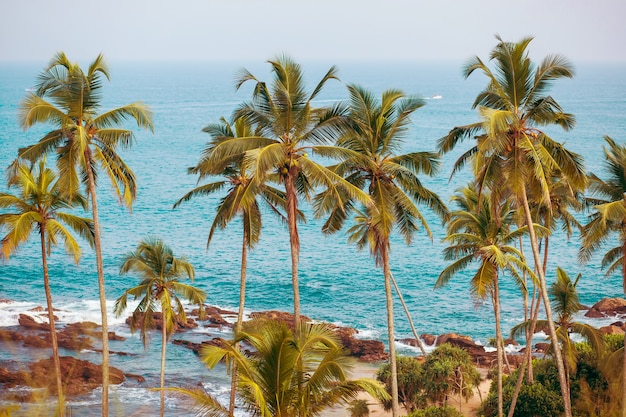 Palm trees on surface of ocean