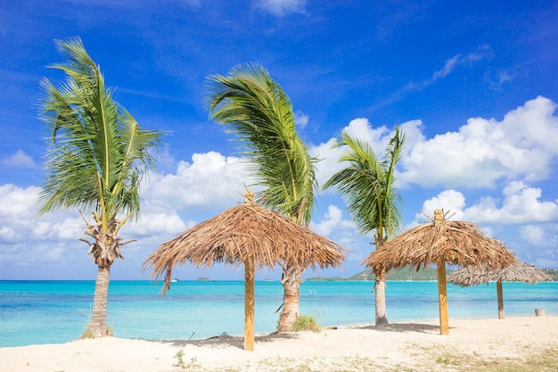 Palm trees at a tropical caribbean beach