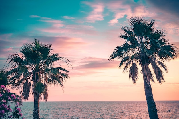 Palm trees uder the rays of the colorful sunset.