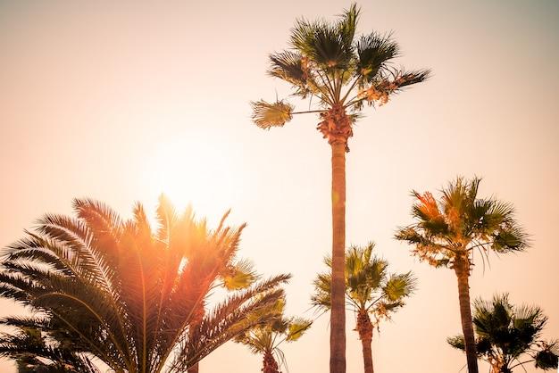 Пальмы под лучами красочного заката.
