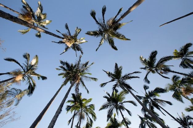 Palm trees viewed from the bottom up