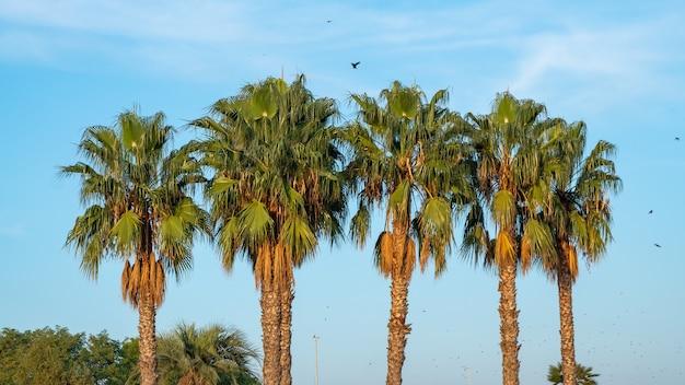 どんよりした青い空とヤシの木