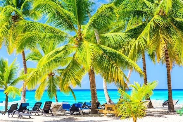 カリブ海の熱帯のビーチにあるサンラウンジャー付きのヤシの木。ドミニカ共和国、サオナ島。休暇旅行の背景。