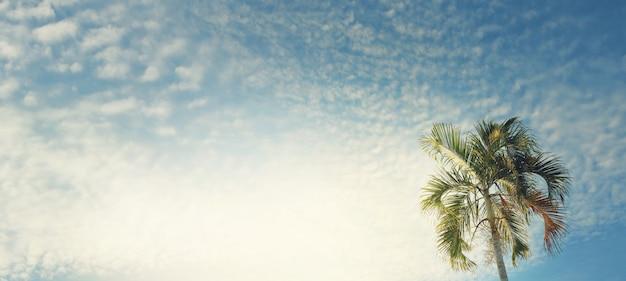 空を背景のヤシの木(wodyetia、フォックステールパーム)。旅行、夏、休暇、熱帯のビーチのコンセプトのレトロなトーンのイメージ。