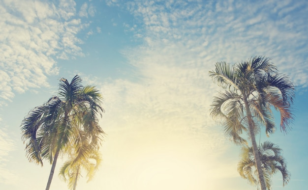 Palm trees (wodyetia ,foxtail palm) against sky. retro toned image for travel, summer, vacation and tropical beach concept.