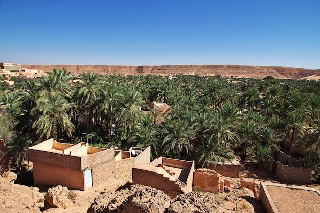 Palm tress in ghardaia city, sahara desert, algeria
