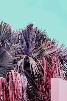 ヤシの熱帯の場所。カナリア諸島。ファッション旅行の雰囲気