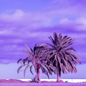 ヤシの熱帯の場所。カナリア諸島。旅行のコンセプトアート