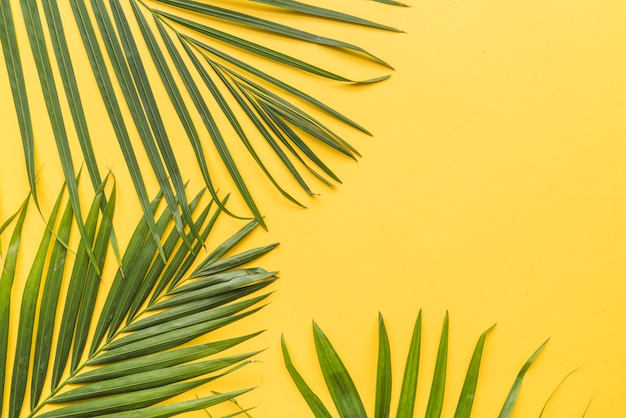 Palm twigs on yellow background
