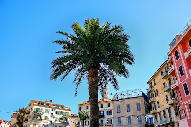 Palm with buildings in sanremo, italy