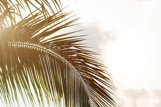 ココナッツpalm子の木の底面図葉