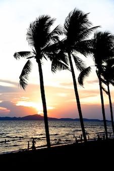 熱帯のビーチでシルエットビーチ観光客ココナッツpalm子の木夕日の海