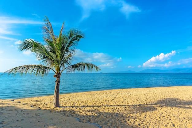 태국 사무이 섬의 노란 모래 해변에 있는 팔마