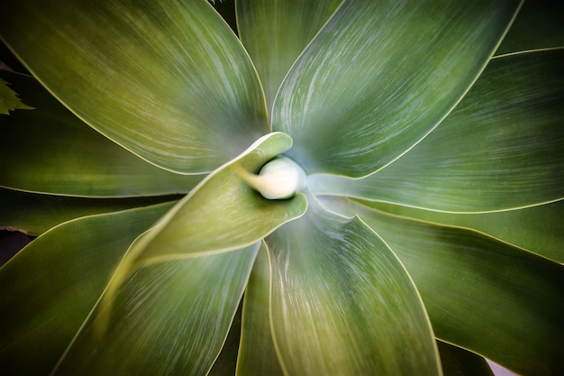Palmera leaves