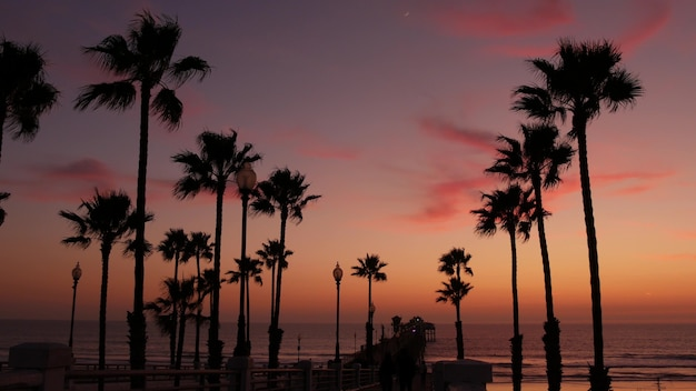 Пальмы и сумеречное небо в калифорнии, сша. атмосфера захода солнца пляжа тропического океана. лос-анджелесские флюиды.