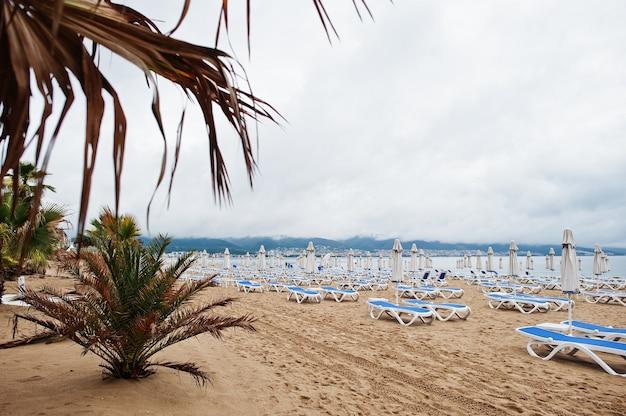 ブルガリアの黒海のサニービーチのヤシの木。夏休み旅行休暇。