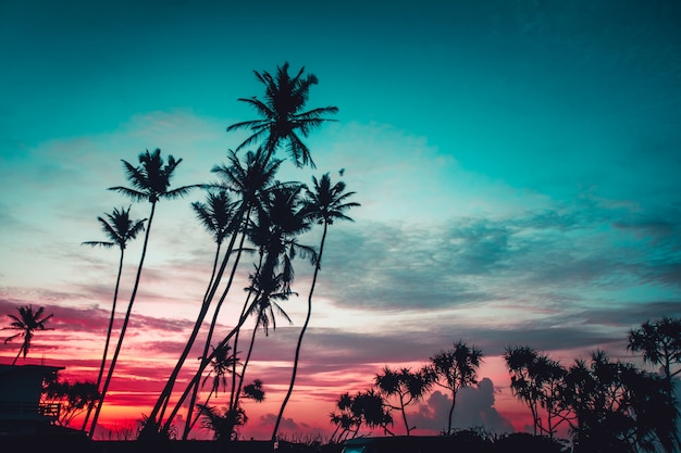 The palms on the bright sunset background.