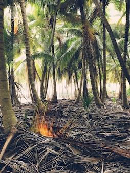 정글에서 손바닥이 나란히 자랍니다.