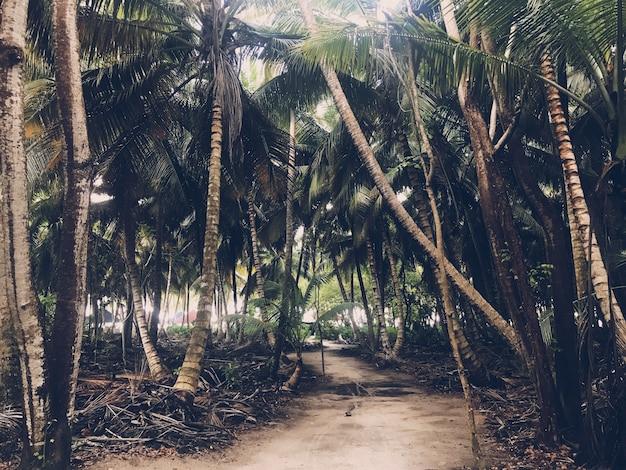Пальмы растут бок о бок в джунглях