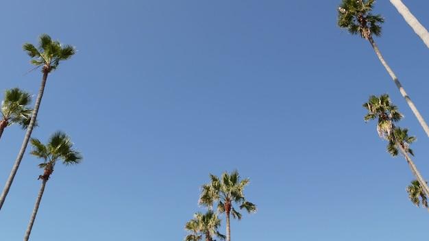 미국 캘리포니아주 로스앤젤레스에 있는 야자수. 태평양의 산타모니카와 베니스 비치의 여름 미학. 맑고 푸른 하늘과 상징적인 야자수. 할리우드 비벌리힐스의 분위기. la 분위기.