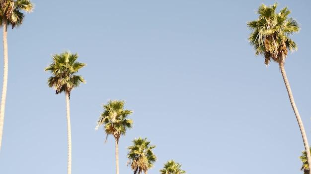 미국 캘리포니아주 로스앤젤레스의 야자수. 태평양의 산타모니카와 베니스 비치의 여름 미학. 맑고 푸른 하늘과 상징적인 야자수. 할리우드 비벌리힐스의 분위기. la 분위기.
