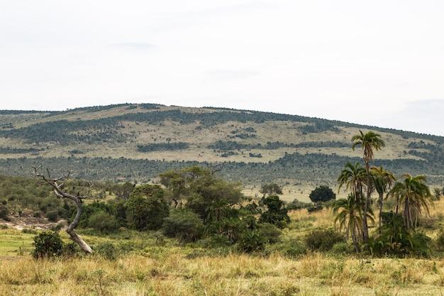 Пальмы на фоне холмов масаи мара в африке