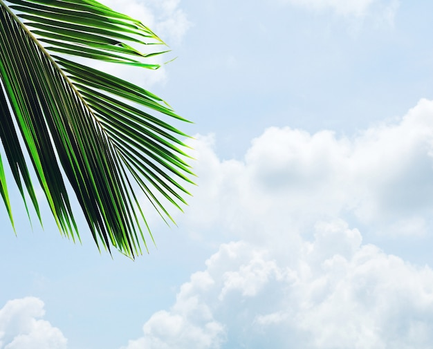 Palms leaf on blue sky with cloud in summer