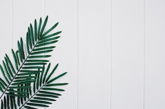 Palms leaves on white wood background with space on the right