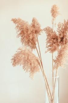 Трава пампасов в стеклянной вазе у серой стены.