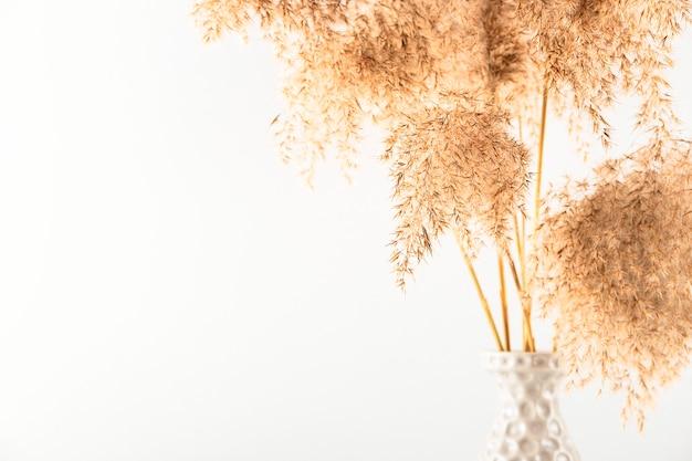 Трава пампасов в серой вазе на белой стене модный букет из засушенных цветов фона с копией пространства
