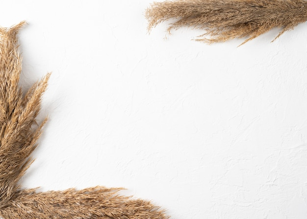 Pampas grass on white wall background, frame made of reeds. concept of natural beauty. top view
